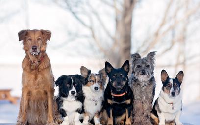 Podatek za psa 2021: ile wynosi, kto i do kiedy musi zapłacić