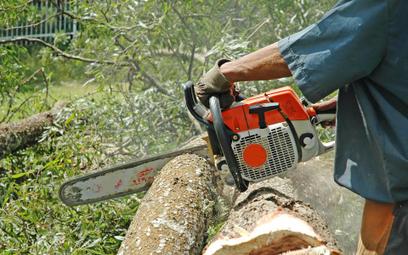 Wycinka drzew bez problemów i kosztów