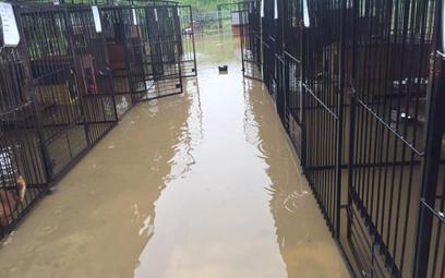 Pod koniec maja woda zalała schornisko dla bezdomnych zwierząt w Borku koło Bochni. Dziś będzie możn