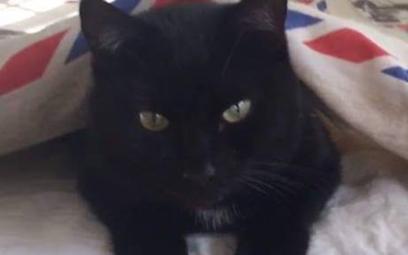 Odnalazła się kotka Łupina z Oslo