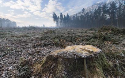 Lex Izera może zrujnować polskie lasy