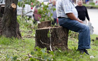 Wycinka drzew: nie będzie 54 tys. zł kary za pomyłkę w wyliczeniu terminu