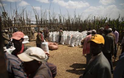 245 mln dol. Na taką wartość wyceniane są potrzeby żywnościowe Etiopii, jeśli kraj ma uniknąć kolejn