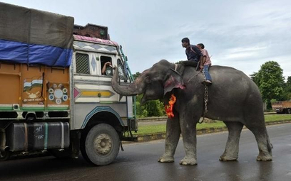 Agenci turystyczni powinni zadbać o słonie