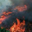 Pożary Amazonii pokazały, jak wiele na Ziemi mamy do stracenia