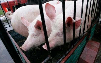 Rozmowy w sprawie polskiej wieprzowiny w USA będą w Brukseli