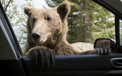 Na wypadek niedźwiedzia i nie tylko. Autocasco na wakacje