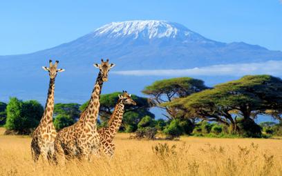 Rainbow: Pierwszy czarter do Kenii wypełniony w 100 procentach