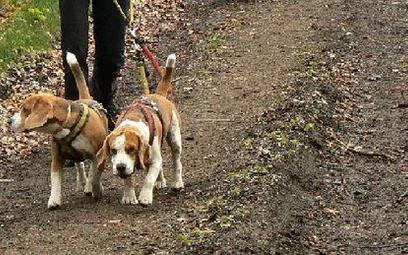 Pies, smycz i las – to wystarczy do dogtrekkingu