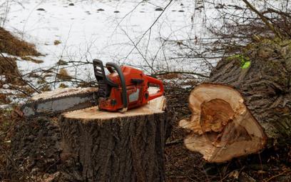 SN o przepadku: sąd ma sprawdzić do kogo należała pilarka do nielegalnej wycinki drzew