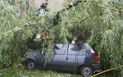 Jeśli wiatr przewrócił zdrowe drzewo, trudno żądać odszkodowania od właściciela działki.