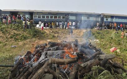 Śmierć słoni na torach kolejowych. Nie po raz pierwszy
