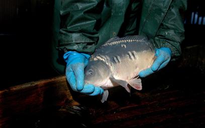 """""""Ryby nie czują bólu"""". Sąd zwolnił kontrowersyjnego biegłego"""