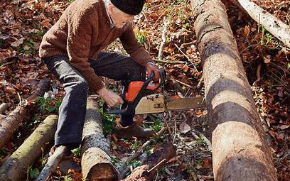 Opłatę ustala się, biorąc pod uwagę wielkość obwodu pnia, gatunek drzewa