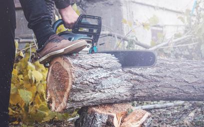 Łatwo wyciąć zabytkowe drzewa